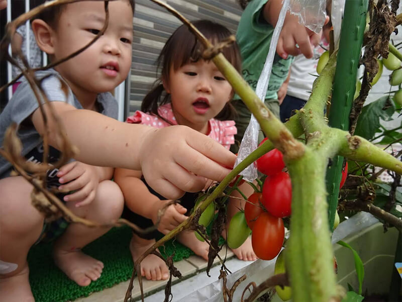 お野菜の栽培